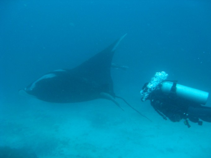 A massive Manta stayed to play with us for about 20 minutes by Darwin Island, Galapagos