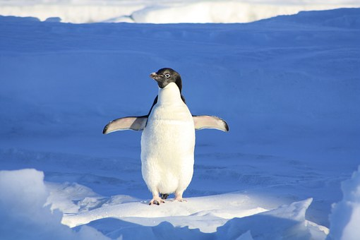 Visiting South America in July to see Penguins? Not so much.