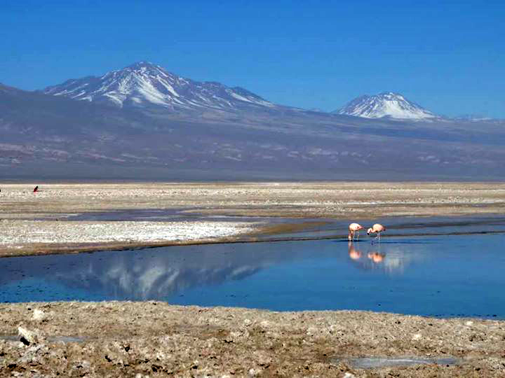 Wild Flamingos at Sen Pedro de Atacama