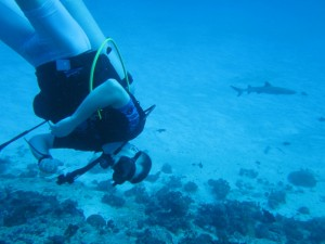 Getting Started with Dive Gear