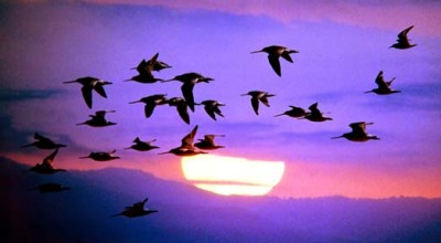 Observation Deck Podcast Feed Migration – Please resubscribe
