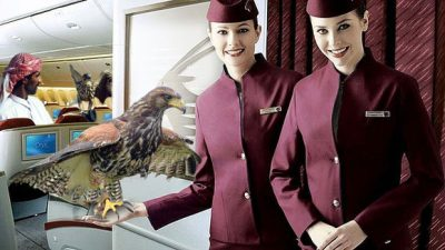 Bring your falcon on your flight to Doha